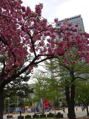 八重桜とスカイツリー