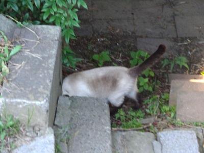 神社にいた猫