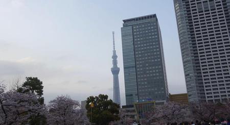 錦糸公園の桜とスカイツリー
