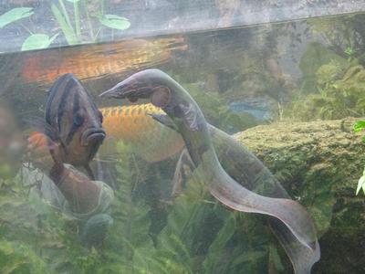 熱帯アジアの魚