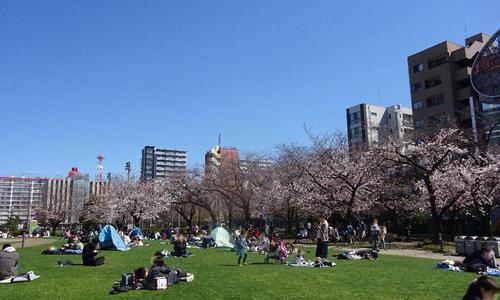 錦糸公園の桜 1