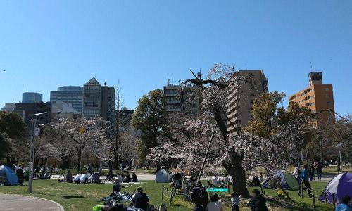 錦糸公園の桜 5