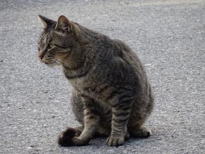 稲毛海浜公園の猫 その2