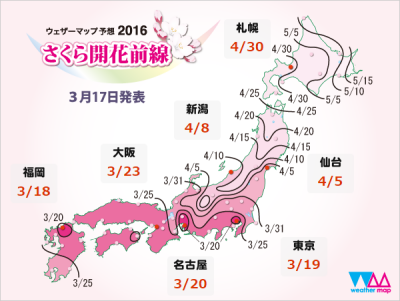 桜開花予想2016