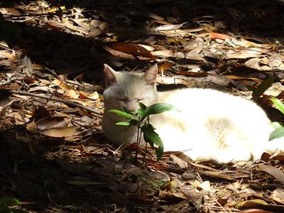 お休み中の白猫さん