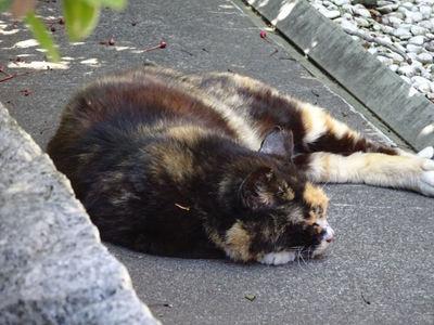 爆睡中のサビ猫さん