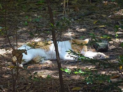 爆睡中の茶白猫さん