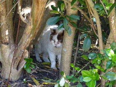 木陰から猫さん