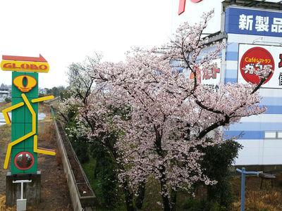 GLOBO看板近くの桜