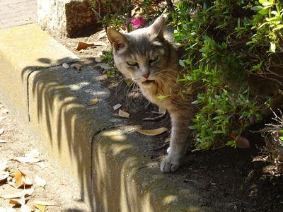 第1猫発見