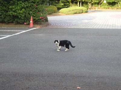 白黒ねこさん 駐車場