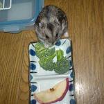 ブロッコリーに食いつく、しんのすけくん