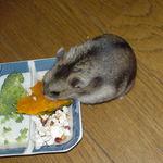 かぼちゃを食べるユウキ