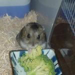ブロッコリーを食べるのんちゃん
