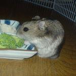 ブロッコリー食べ中ののんちゃん