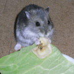 バナナチップを食べるコー太