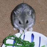茎立てブロッコリーを食べるコー太