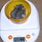 コー太は体重増加です